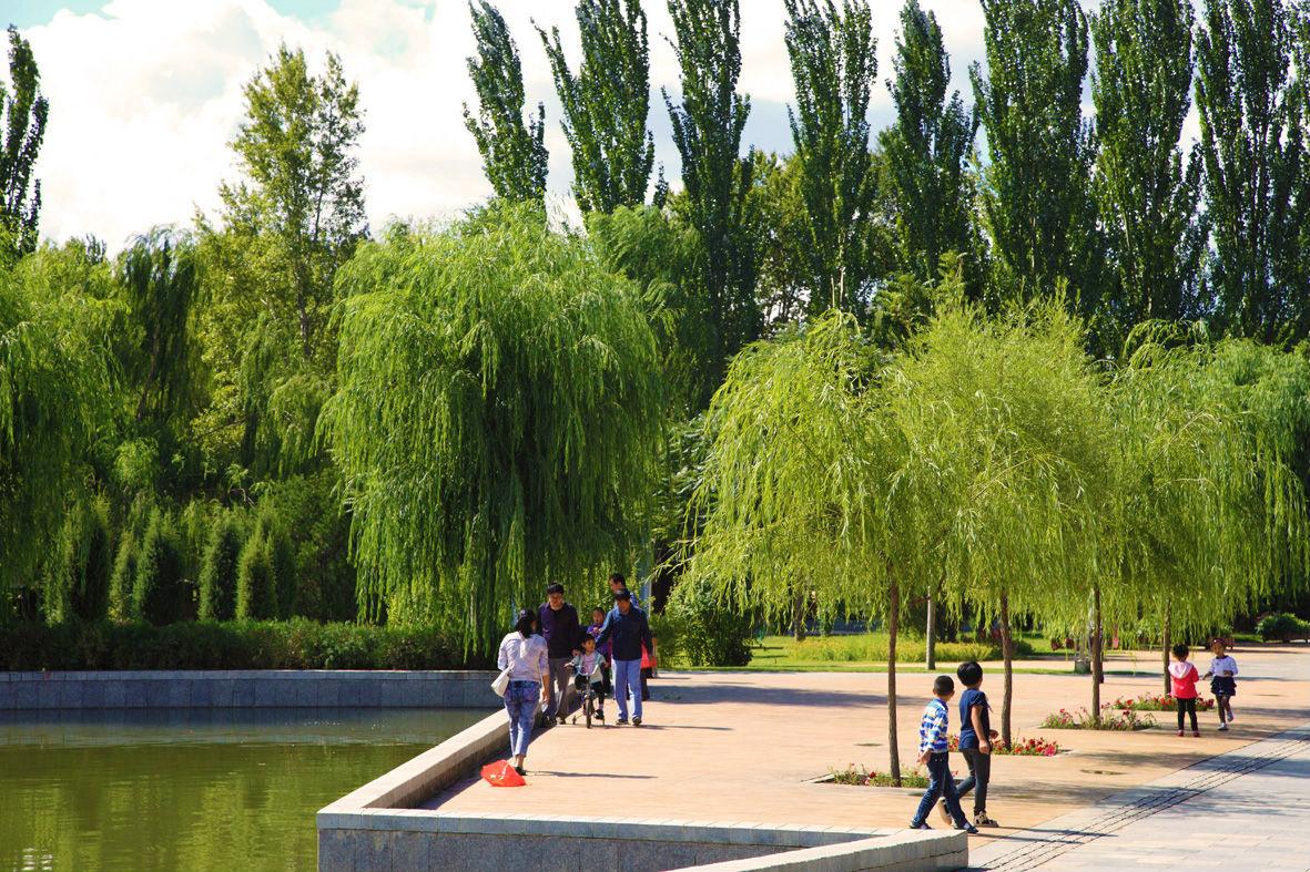 壁纸 垂柳 电脑 风景 风景壁纸 柳树 摄影 树 桌面 1181_787