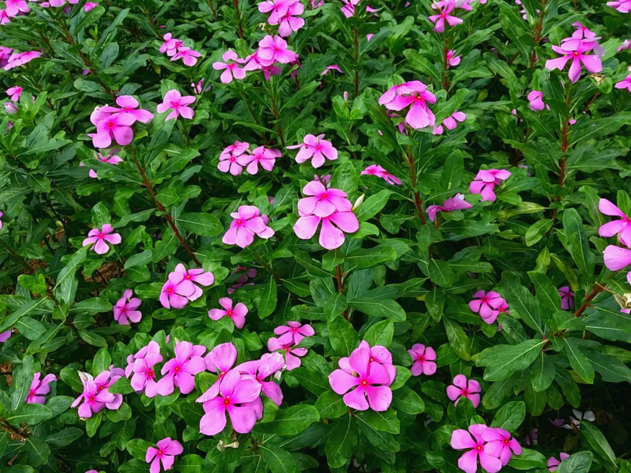 春天柳叶美景展示图片