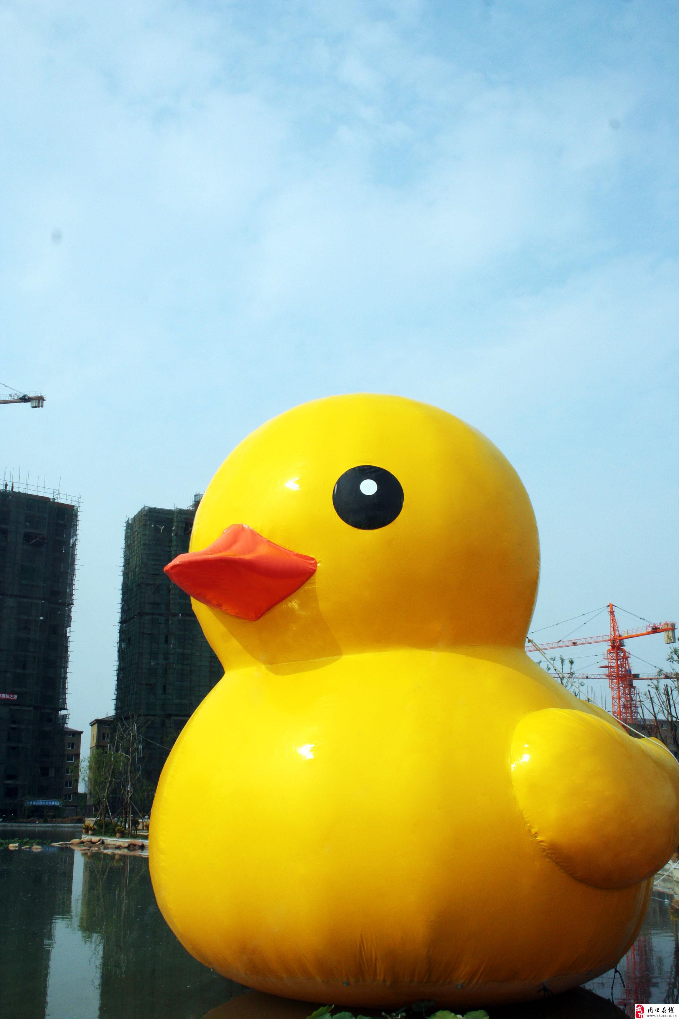 大黄鸭qq头像_qq头像女生大黄鸭