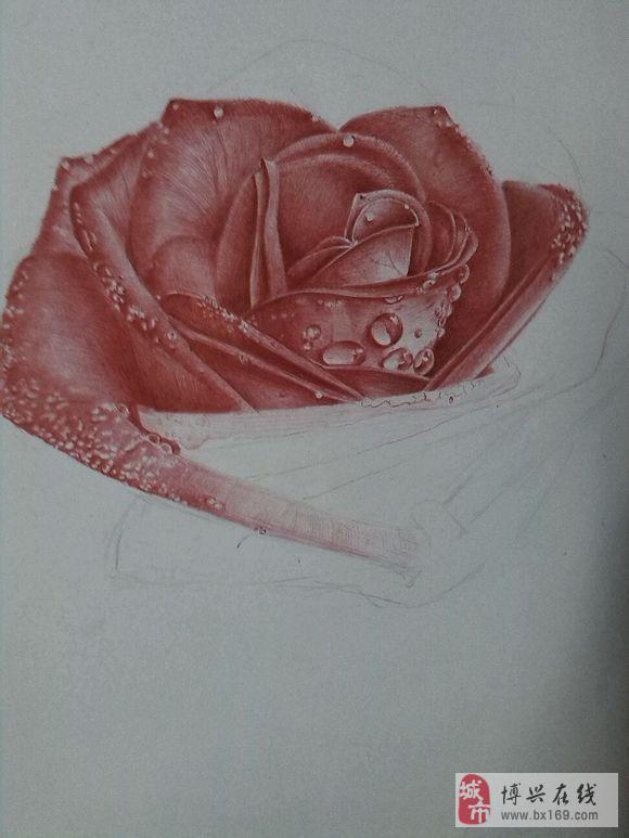 圆珠笔手绘玫瑰线稿