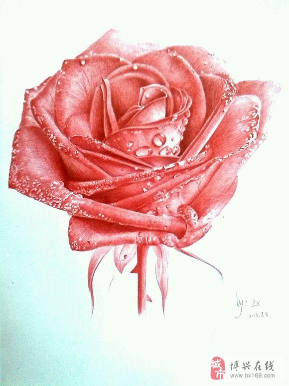 圆珠笔画水滴玫瑰步骤
