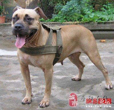 世界上最可爱的犬