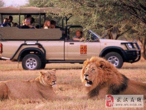 [注意]肯尼亚动物大迁徙