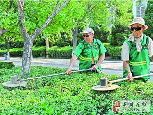 园林工人冒高温忙绿化