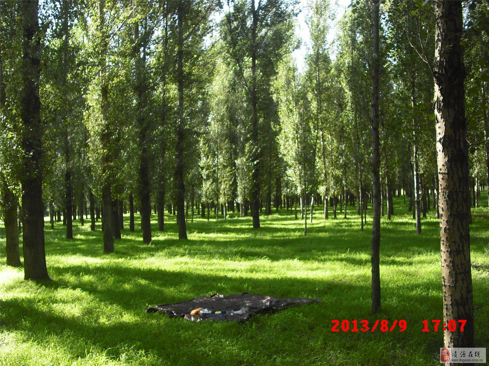 主题: 消暑休闲小树林