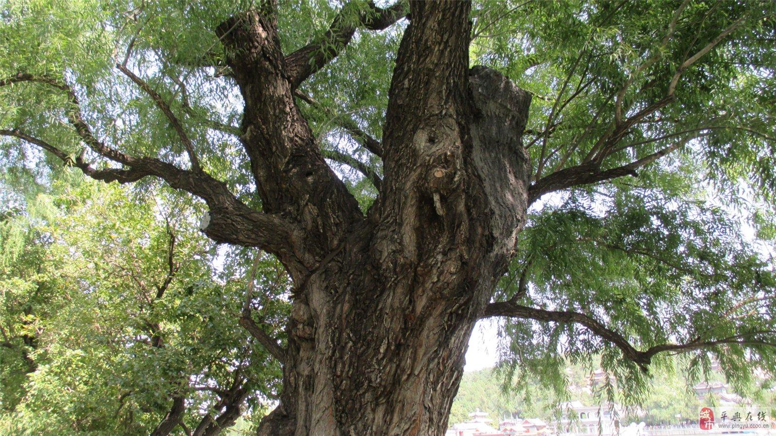 壁纸 树 榕树 1600_900