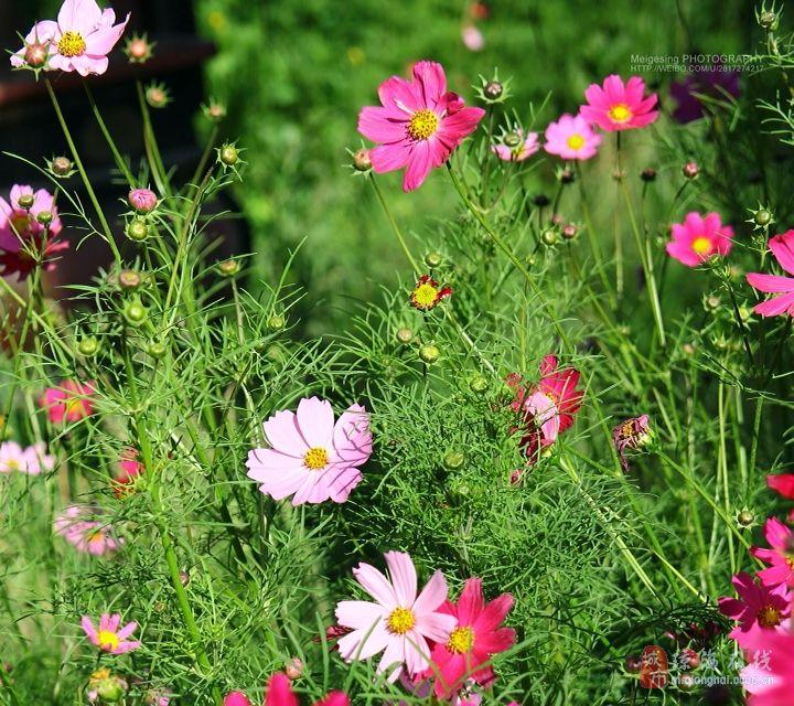 水桶包带花的图片