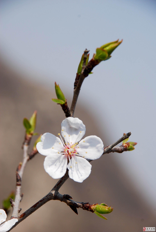 世界上最可爱的花