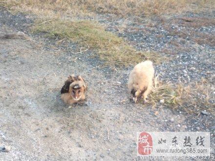 如东惊现国家二级保护动物-猴面鹰