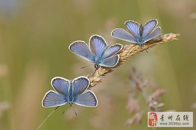 最美蝴蝶素材大全唯美