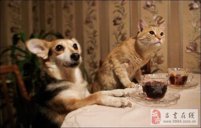 戒酒保证书! - 小辉辉 - 仰注峦嶂慕仙悠