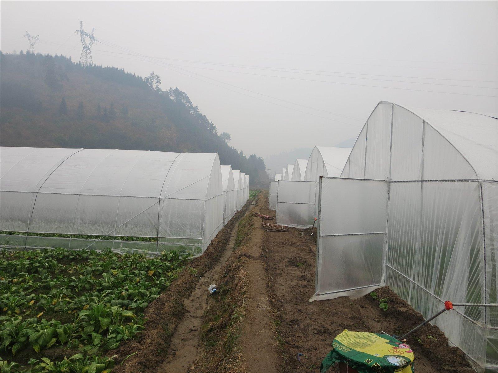 连山县大棚蔬菜种植基地