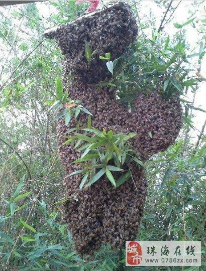 蜜蜂是世界上最伟大的动物