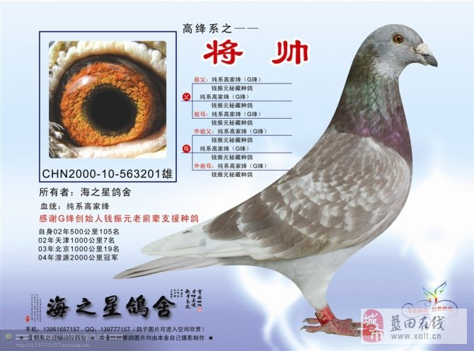 我喜爱的超远程信鸽