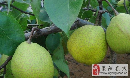 2014-2-15论坛图片_莱阳论坛