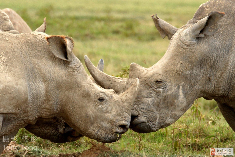 白城人在非洲——野生动物摄影爱好者