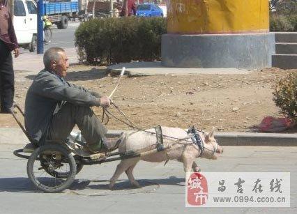最肥孕妇逼影�_最牛逼的车图片,看完以后不要笑!