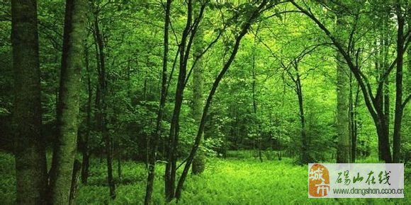 森林狂想曲钢琴谱