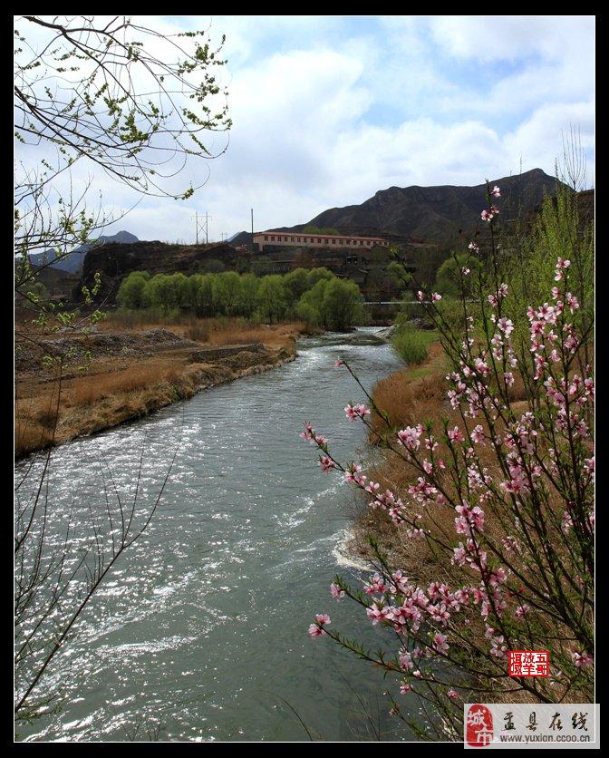 春天景象柳树大雁