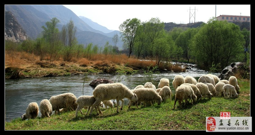 五哥放羊感悟 举机随拍《春天来了》