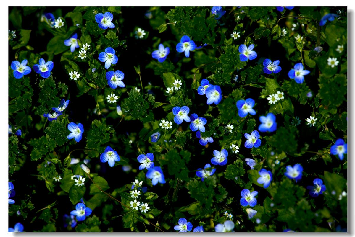 春天的野花
