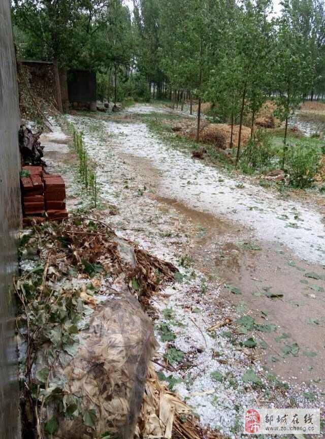 邹城市香城镇詹邱遭受严重的冰雹袭击