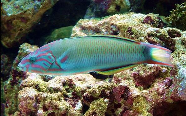 壁纸 动物 海底 海底世界 海洋馆 水族馆 鱼 鱼类 598_372