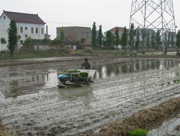 如东县水稻移栽工作有序开展