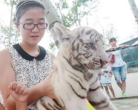 秦皇岛野生动物园白小虎首次与游客见面