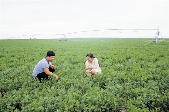 扎鲁特旗大力发展生态草业