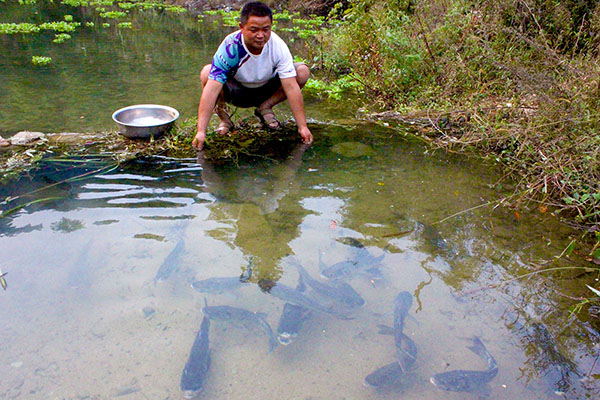 河道养鱼 效果图