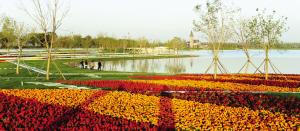 武清区南湖景观改造主体基本完工 绿化初具规模