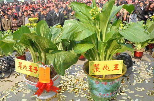 连州菜心节 农产品展销会现场签约8.32亿元,菜心拍31万图片