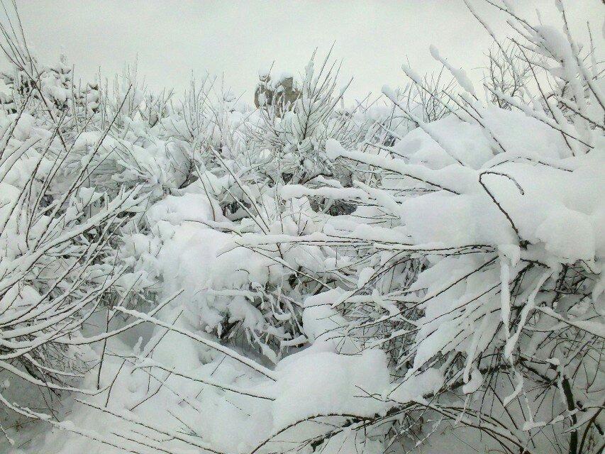 雪景素描绘画步骤
