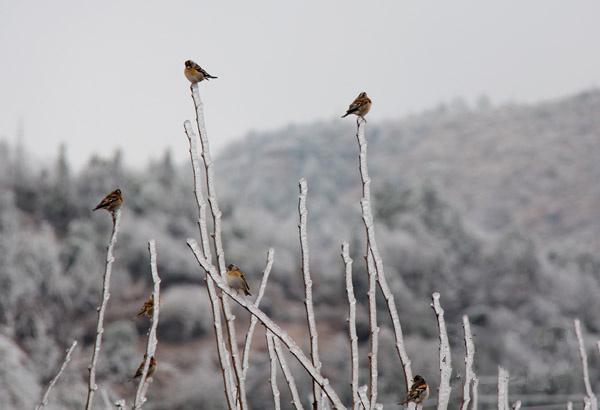 鸟儿在结了冰的树枝上休憩