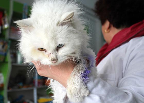 记者了解到,吴红英和丈夫董树波都是兽医,平时对小动物充满爱心,一直