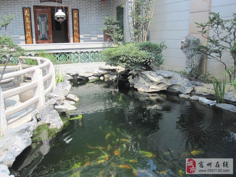 小庭院养鱼池设计图展示
