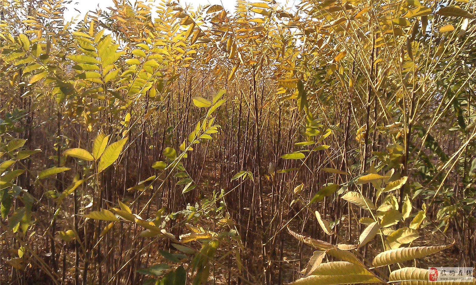 青州市惠民果树苗木专业合作社简介   青州市惠民果树苗木专业合作社是山东省专门从事果树及绿化树木栽培研究、苗木繁育的单位。本社靠优良的种苗、过硬的技术、良好的信誉、真诚的服务,带出了一大批十万元、百万元种植大户,让全国许多农民兄弟率先过上了小康生活,取得了巨大的社会效益、生态效益和经济效益!   本社总部位于山东省青州市弥河镇小章庄村,在何官镇南张楼社区,邵庄镇陈家车马村,益都街道办事处冉家村;临朐县城关街道办事处教场村等社区和村庄,建有高标准的名优特稀果树苗木、绿化苗木种植基地,各基地交通便利,区位优越