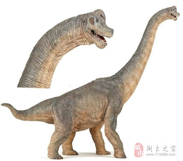 霸王龙恐龙图片大全内容|霸王龙恐龙图片大全版面设计