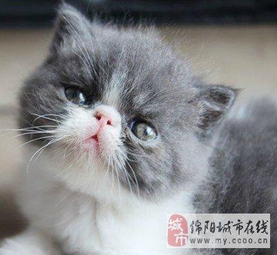 顽皮可爱小加菲猫米