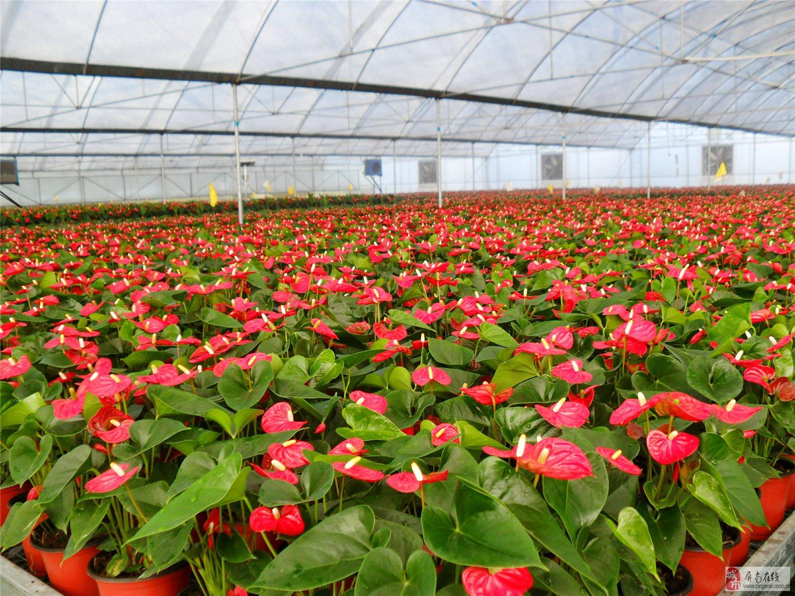 论野生花卉在现代园艺中的可持续发展研究图片