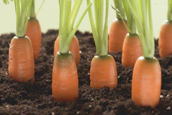 胡萝卜 图片 大全 水果 步骤
