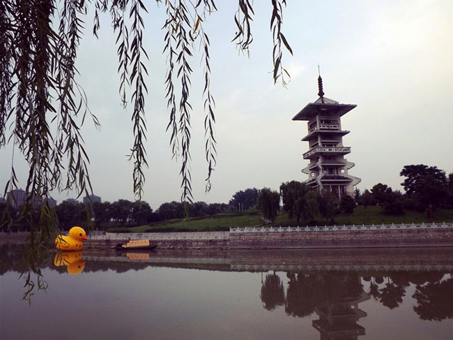 濉河里千禧塔下的大黄鸭