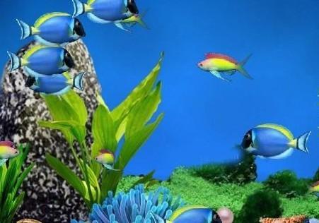 光山海底世界水族馆_光山在线黄页信息_城市中国(城市