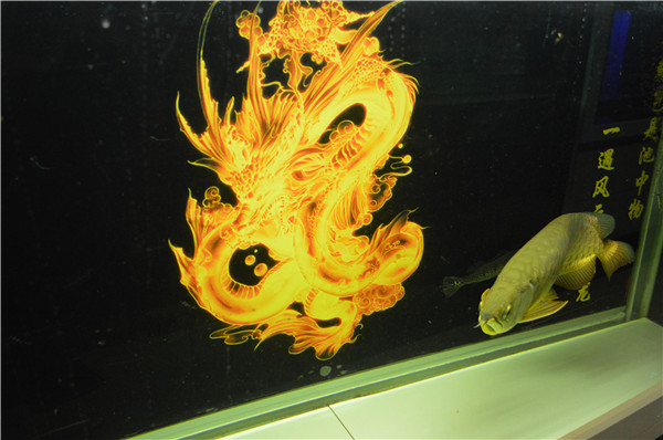 梦幻水族-可丽爱水族箱-观赏鱼